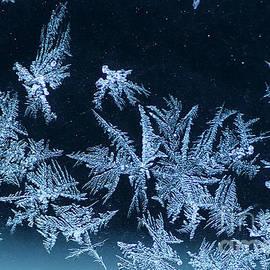 Darren Fisher - Winter Art