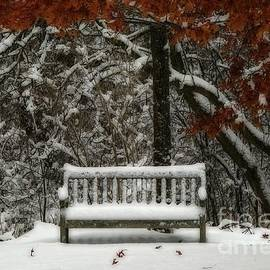 Inspired Nature Photography By Shelley Myke - Winter at the Arboretum