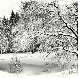 Marcia Lee Jones - Winter Bliss