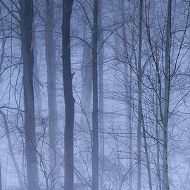 Rachel Cohen - Winter Blues