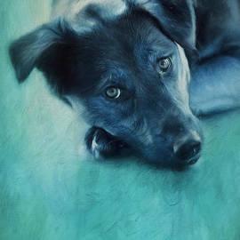 Priska Wettstein - Winter Dog