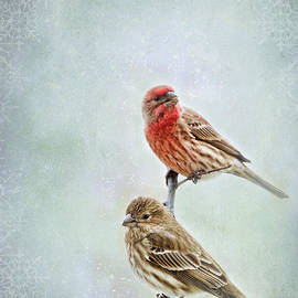 Debbie Portwood - Winter Finches
