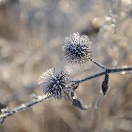 Randi Grace Nilsberg - Winter Flowers