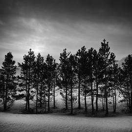 Frodi Brinks - Winter forest