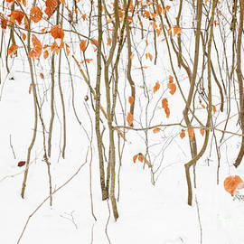 Maria Bobrova - Winter Forest