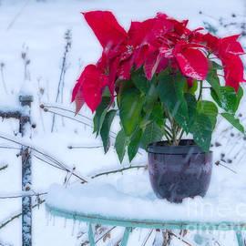 Alana Ranney - Winter Garden