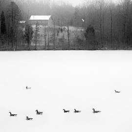 Patrick M Lynch - Winter Geese 2 BW