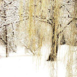 Julie Palencia - Winter Gold
