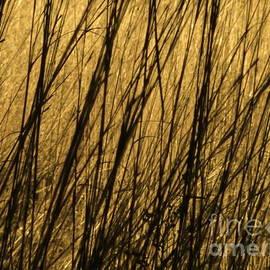 Tim Good - Winter Grass