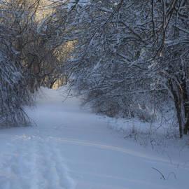 Andrew Pacheco - Winter Hike
