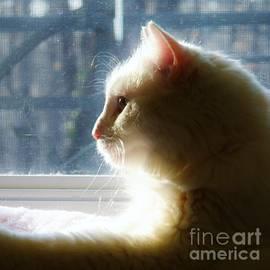 Judy Via-Wolff - Winter Light Profile