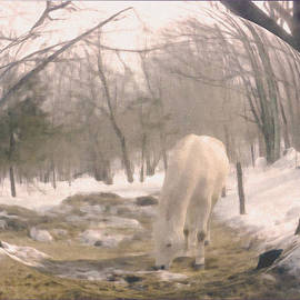 Patricia Keller - Winter Moments- With My Paso Fino Stallion