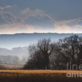 Jan Bickerton - Winter Morning