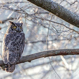 Wes and Dotty Weber - Winter Owl D0851
