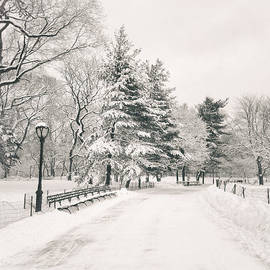 Vivienne Gucwa - Winter Path - Snow Covered Trees in Central Park