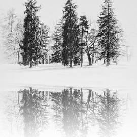 Bill Cannon - Winter Pines