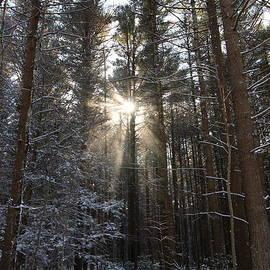 Neal  Eslinger - Winter Rays