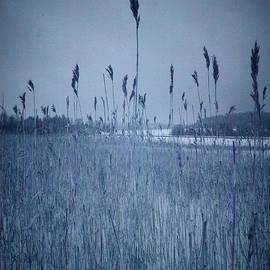 Jouko Lehto - Winter reeds infrared
