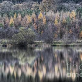 David Tinsley - Winter Reflections