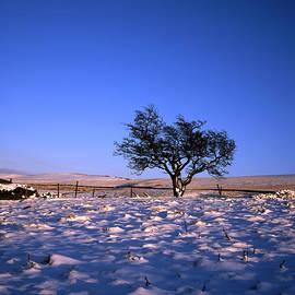 Winter scene Hawthorn Tree by a field boundary Lyme Handley near Lyme Park Cheshire England