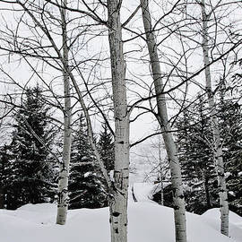 Scott Pellegrin - Winter