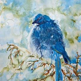 CheyAnne Sexton - Winter Scrub Jay on Juniper