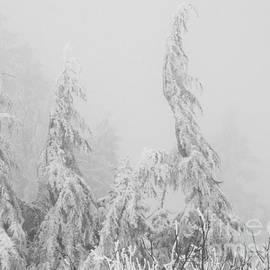 Inge Riis McDonald - Winter shapes