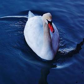 Daniel Thompson - Winter Spin... Swan Style