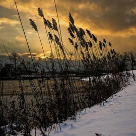 Chris Bordeleau - Winter sunrise through the reeds