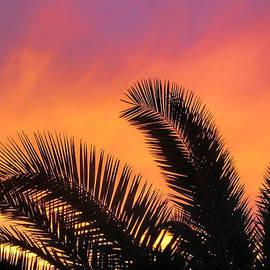 Tammy Espino - Winter Sunset