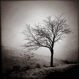 David Bowman - Winter Tree