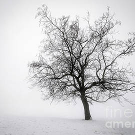 Elena Elisseeva - Winter tree in fog