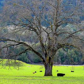 Michele  Avanti - Winter Tree with Cows by the Umpqua River