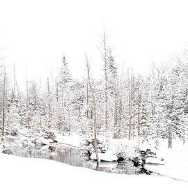 Andrea Kollo - Winter Wasteland
