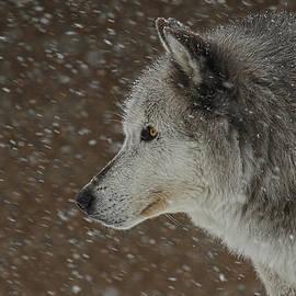 Steve McKinzie - Winter Wolf