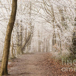 Anne Gilbert - Winter Woods