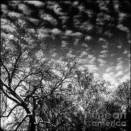 Frank J Casella - Winterfold - Monochrome