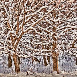Elizabeth Winter - Winter