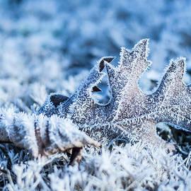 Parker Cunningham - Winter