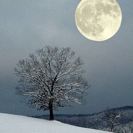 Laurinda Bowling - Winter
