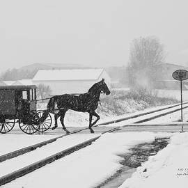 Steve and Sharon Smith - Wintry buggy ride