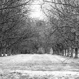 Jamie Anderson - Wintry Pecan Orchard B and W