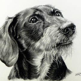 Katja Sauer - Wire-haired dachshund