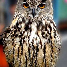 Colette V Hera  Guggenheim  - Wise forest mountain Owl Spain