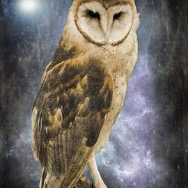 Jordan Blackstone - Wise Old Owl - Image Art by Jordan Blackstone