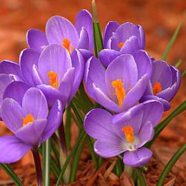 David Simons - Wishing For Spring