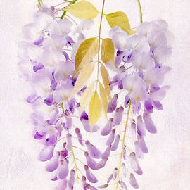 Julie Woodhouse - Wisteria