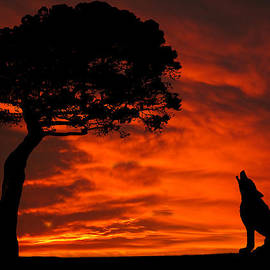 David Dehner - Wolf Calling For Mate Sunset Silhouette Series