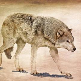 Athena Mckinzie - Wolf Caught In Winter Storm