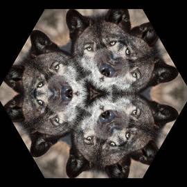 Patsy Zedar - Wolf Hex 4